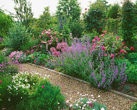 NEPETA__ALLIUMS__ROSES_AND_PINKS_ALONG_THE_GRAVEL_PATH_AT_THE_ANCHORAGE__KENT