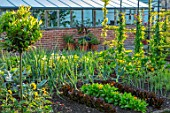MORTON HALL, WORCESTERSHIRE: THE KITCHEN GARDEN IN JULY. LETTUCES, SWEET PEAS, ARCH, PERGOLA, VEGETABLES, POTAGER, ENGLISH, COUNTRY, GARDENS