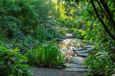 MORTON_HALL_WORCESTERSHIRE_THE_STROLL_GARDEN_IN_JULY_STEPPPING_STONES_IRIS_ENSATA_ROSE_QUEEN_WATER_P