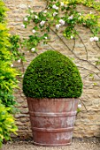 WINSON MANOR, GLOUCESTERSHIRE: TERRACOTTA CONTAINER, BOX BALLS, CLIPPED, TOPIARY, SUMMER
