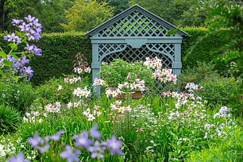 ROCKCLIFFE_GARDEN_GLOUCESTERSHIRE_BLUE_ARBOUR_SEAT_DECORATIVE_LILIUM_REGALE_ENGLISH_COUNTRY_GARDENS_