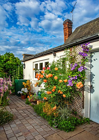 THATCH_COTTAGE_CROWLE_WORCESTERSHIRE_COTTAGE_GARDEN_BACK_DOOR_PATIO_ROSE_ROSA_LADY_OF_SHALLOT_ENGLIS