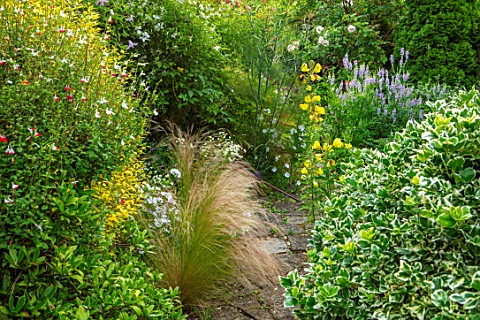 THATCH_COTTAGE_CROWLE_WORCESTERSHIRE_PATH_BORDERS_STIPA_TENUISSIMA_EVENING_PRIMROSE_OENOTHERA_GALEGA