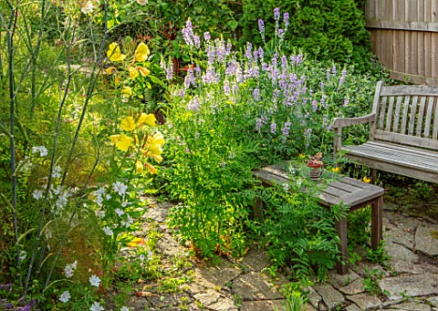 THATCH_COTTAGE_CROWLE_WORCESTERSHIRE_WOODEN_BENCH_EVENING_PRIMROSE_OENOTHERA_GALEGA_OFFICINALIS_FENN