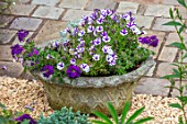 THATCH COTTAGE, CROWLE, WORCESTERSHIRE: PATIO, STONE PLANTER, CONTAINER PLANTED WITH PURPLE VERBEMA, PURPLE AND WHITE MINI PETUNIA VIOLET STAR