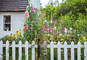 THATCH COTTAGE, WORCESTERSHIRE: FRONT, WHITE, PICKET FENCE, FENCING, BLACK AND WHITE COTTAGE, HOLLYHOCKS, SWEET PEAS, POPPIES, GARDEN, ENGLISH, COTTAGES