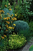 BRICK PATH WITH HERB BORDER OF SYMPHITUM UPLANDICUM  PHLOMIS FRUTICOSA  LAVANDUFOLIA CHIVES & GOLDEN MARJORAM. THE ANCHORAGE  KENT.
