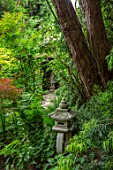 WATERDALE GARDEN, WOLVERHAMPTON, WEST MIDLANDS - ORIENTAL  JAPANESE GARDEN WITH STNE LANTERN ORNAMENT. WOODLAND, SHADE, SHADY