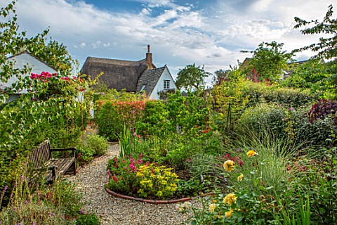 BATTS_COTTAGE_OXFORDSHIRE_GRAVEL_PATH_ISLAND_BED_ROSA_ABSOLUTELY_FABULOUS_MISCANTHUS_MORNING_LIGHT_P