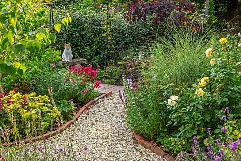 BATTS_COTTAGE_OXFORDSHIRE_GRAVEL_PATH_ISLAND_BEDS_ROSA_ABSOLUTELY_FABULOUS_MISCANTHUS_MORNING_LIGHT_