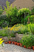 BATTS COTTAGE, OXFORDSHIRE: GRAVEL TERRACE, RAISED BEDS, HERBS, LAVENDER, HEDGES, HEDGING OF PHOTINIA RED ROBIN, JULY, HERB GARDEN