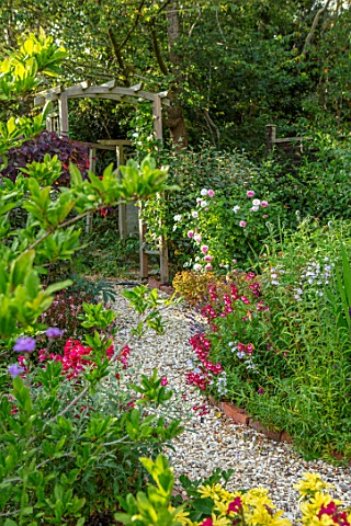 BATTS_COTTAGE_OXFORDSHIRE_PATH_PERGOLA_ARCH_PENSTEMON_SOUR_GRAPES_PENSTEMON_RED_PHOENIX_ENGLISH_COUN