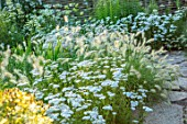 THE NEWT IN SOMERSET: THE WHITE GARDEN, JULY, ACHILLEA MILLEFOLIUM SCHNEETALER, PENNISETUM VILLOSUM, PERENNIALS, GRASSES