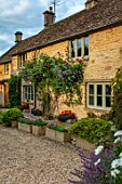 ADAMS POOL, GLOUCESTERSHIRE: FRONT OF COTTAGE WITH STONE TROUGHS, CLIMBING ROSE AND CLEMATIS PERLE DAZUR