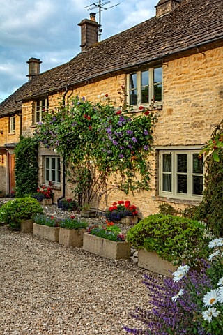 ADAMS_POOL_GLOUCESTERSHIRE_FRONT_OF_COTTAGE_WITH_STONE_TROUGHS_CLIMBING_ROSE_AND_CLEMATIS_PERLE_DAZU