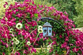 ADAMS POOL, GLOUCESTERSHIRE: WINE RED FLOWERS OF CLEMATIS MADAME JULIA CORREVON, ARCHWAY, ARCH