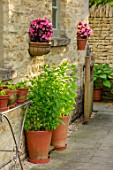 ADAMS POOL, GLOUCESTERSHIRE: PATH, WALL, BEGONIAS IN CONTAINERS, HERBS IN TERRACOTTA CONTAINERS
