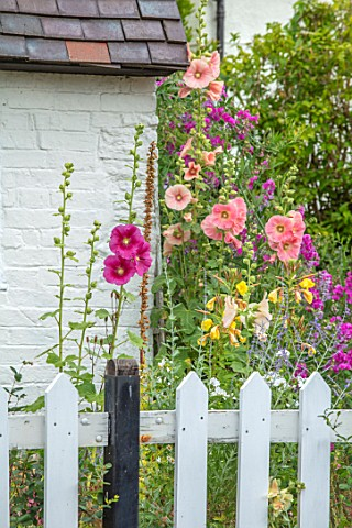 THATCH_COTTAGE_WORCESTERSHIRE_FRONT_WHITE_PICKET_FENCE_FENCING_BLACK_AND_WHITE_COTTAGE_HOLLYHOCKS_GA