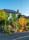 WATERDALE, WEST MIDLANDS: HOUSE AND FRONT GARDEN - STIPA GIGANTEA, KNIPHOFIA, RED ORACH, ATRIPLEX HORTENSIS VAR RUBRA, RED HOT POKERS, ALLIUMS, VERBASCUM OLYMPICUM