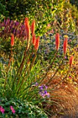 WATERDALE, WEST MIDLANDS: FRONT GARDEN - RED HOT POKERS, KNIPHOFIA MANGO POPSICLE, CAREX, ERYNGIUM ZABELII BIG BLUE