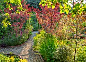 BATTS COTTAGE, OXFORDSHIRE: PATH, ARCH, PRUNUS NIGRA, MALUS ROYALTY, LEYCESTERIA FORMOSA. ENGLISH, COUNTRY, GARDEN