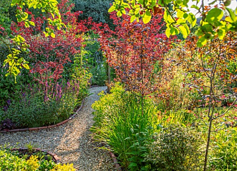 BATTS_COTTAGE_OXFORDSHIRE_PATH_ARCH_PRUNUS_NIGRA_MALUS_ROYALTY_LEYCESTERIA_FORMOSA_ENGLISH_COUNTRY_G