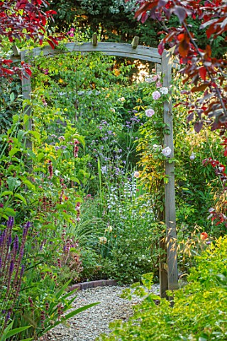 BATTS_COTTAGE_OXFORDSHIRE_PATH_PERGOLA_ARCH_LEYCESTERIA_FORMOSA_PRUNUS_NIGRA_ENGLISH_COUNTRY_GARDEN