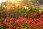 PETTIFERS, OXFORDSHIRE: DESIGNER GINA PRICE: AUTUMN BORDER IN JULY, SUNRISE, RED BORDER, COMBINATION OF MONARDA CAMBRIDGE SCARLET AND HELENIUM SAHINSEARLY FLOWERER