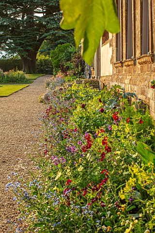 CANONS_ASHBY_NORTHAMPTONSHIRE_THE_NATIONAL_TRUST__BORDERS_NICOTIANA_LIME_GREEN_NICOTIANA_PURPLE_PERF