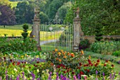 CANONS ASHBY, NORTHAMPTONSHIRE, THE NATIONAL TRUST - THE KITCHEN GARDEN, POTAGER, LARKSPUR, DAHLIAS, DAHLIA DAVID HOWARD, PICKING, CUTTING, GARDENS, LION GATES, JULY