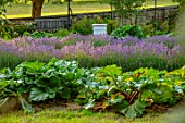 CANONS ASHBY, NORTHAMPTONSHIRE, THE NATIONAL TRUST - THE KITCHEN GARDEN, POTAGER, LAVENDER, RHUBARB, PICKING, CUTTING, GARDENS, JULY, SUNSET, EVENING, BEEHIVE