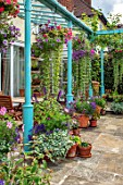 WATERDALE, WEST MIDLANDS: TERRACE, PATIO, BLUE METAL PERGOLA, TERRACOTTA CONTAINERS IN PURPLE AND PINK, HANGING BASKETS