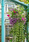 WATERDALE, WEST MIDLANDS: TERRACE, PATIO, BLUE METAL PERGOLA, HANGING BASKET
