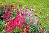 WATERDALE, WEST MIDLANDS: RED BORDER BY LAWN WITH LYCHNIS CORONARIA, ALSTROEMERIA, RED ASTILBE. BORDERS