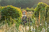 TYGER BARN, NORFOLK: DESIGNER JULIANNE FERNANDEZ: BORDER, PHLOMIS RUSSELIANA, MORINA LONGIFOLIA, VERBASCUM ALBA, DAHLIA TWYNINGS AFTER EIGHT, CARPINUS BETULUS