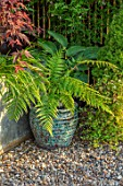 TYGER BARN, NORFOLK: DESIGNER JULIANNE FERNANDEZ BLUE CONTAINER IN GRAVEL WITH DICKSONIA ANTARCTICA, FERNS