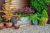 TYGER BARN, NORFOLK: DESIGNER JULIANNE FERNANDEZ BLUE CONTAINER IN GRAVEL WITH DICKSONIA ANTARCTICA, FERNS, ACERS IN CONTAINERS, METAL WATER TROUGH