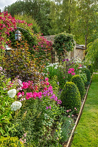 ADAMS_POOL_GLOUCESTERSHIRE_BORDER_BY_LAWN_BOX_TOPIARY_PHLOX_ARCHWAY_CLEMATIS_MADAME_JULIA_CORREVON