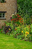 ADAMS POOL, GLOUCESTERSHIRE: HOT, RED BORDER BY LAWN, BORDER, COTTAGE, GARDEN, COTSWOLDS, CROCOSMIA LUCIFER, SUNFLOWERS, SEDUMS