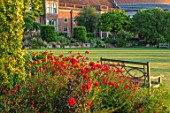 GLYNDEBOURNE, EAST SUSSEX: LAWN, BORDER, CROCOSMIA HELLFIRE, DAHLIA BISHOP OF LLANDAFF, SALVIA ROYAL BUMBLE, RED BORDERS, ENGLISH, COUNTRY, GARDEN