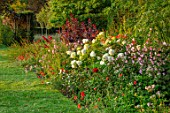 GLYNDEBOURNE, EAST SUSSEX: LAWN, BORDER, HYDRANGEA PANICULATA, COTINUS GRACE, POPPIES, RED BORDERS, ENGLISH, COUNTRY, GARDEN