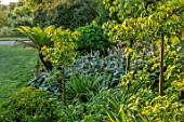 GLYNDEBOURNE, EAST SUSSEX: DICKSONIA ANTARCTICA, HOSTA SIEBOLDIANA, CEIBA PENTANDRA, BORDERS, GREEN, LAWN