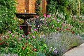 GLYNDEBOURNE, EAST SUSSEX: BORDERS BY OPERA HOUSE: FOUNTAIN, VERONICASTRUM VIRGINICUM, HEMEROCALLIS AMERICAN REVOLUTION, COSMOS PINK POPSOCKS