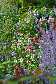 MORTON HALL, WORCESTERSHIRE: SOUTH GARDEN, JULY, ECHINACEA PURPUREA, PHYSOSTEGIA VIRGINIANA SUMMER SNOW, ROSE BOUQUET, SALVIA CARADONNA, SCABIOSA OCHROLEUCA