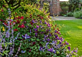 MORTON HALL, WORCESTERSHIRE: SOUTH GARDEN, JULY, CLEMATIS VITICELLA KERMESINA, CLEMATIS FUKUZONO, LAWN, EVENING LIGHT, SUNSET