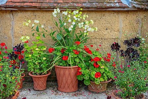 WHICHFORD_POTTERY_OXFORDSHIRE_WALL_CONTAINERS_NOCOTIANA_AEONIUMS_RED_GERANIUMS