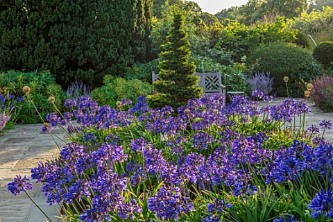 PRIVATE_GARDEN_GLOUCESTERSHIRE__DESIGNER_ANGEL_COLLINS_TERRACE_WITH_AGAPANTHUS_NAVY_BLUE_WOODEN_BENC