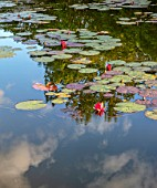 PRIVATE GARDEN, GLOUCESTERSHIRE - DESIGNER ANGEL COLLINS: WATERLILIES AND REFLECTIONS IN LAKE, AUGUST, EVENING