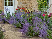 PRIVATE GARDEN, GLOUCESTERSHIRE - DESIGNER ANGEL COLLINS: PEROVSKIA BESIDE GRAVEL PATH, AUGUST