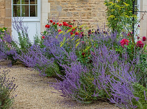 PRIVATE_GARDEN_GLOUCESTERSHIRE__DESIGNER_ANGEL_COLLINS_PEROVSKIA_BESIDE_GRAVEL_PATH_AUGUST